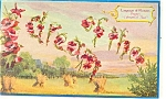 Language of Flowers Postcard Poppy I Dream of Thee 1909