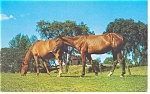 Click here to enlarge image and see more about item p12484:   Horses Postcard p12484