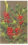 Christmas Postcard Holly and Berries