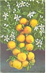 Click here to enlarge image and see more about item p12516: Oranges and Orange Blossoms on Tree Postcard p12516 1912