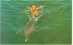 Click here to enlarge image and see more about item p12523: Flipper Being Trained Postcard p12523