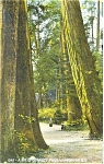 Click here to enlarge image and see more about item p12538: Stanley Park,Vancouver,BC,Canada Postcard