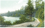 Click here to enlarge image and see more about item p12540: A Drive Stanley Park Vancouver BC Canada Postcard p12540