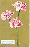 Flowers Postcard ca 1909