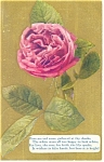 Red Roses Postcard ca 1909