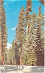 Winter in the Cascades Postcard ca 1961
