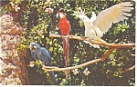 Click here to enlarge image and see more about item p12858: Miami's Beautiful Parrot Jungle Postcard 1957