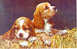 Adorable Puppies Postcard p12921 1958