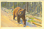 Click here to enlarge image and see more about item p12938: Walking Bear Postcard p12938 1939