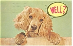 Click here to enlarge image and see more about item p13024: Cocker Spaniel Postcard