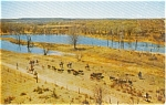 Boys Ranch Texas Herding Cattle  Postcard
