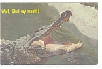 Click here to enlarge image and see more about item p13068x: Alligator , Florida Postcard 1973