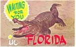 Click here to enlarge image and see more about item p13071: Alligators in Florida Postcard