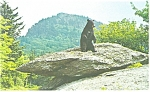 Click here to enlarge image and see more about item p13142: Mildred The Black Bear Grandfather Mt Postcard p13142