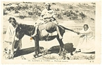 Click here to enlarge image and see more about item p13218: Donkey with Desert Dwellers Postcard p13218