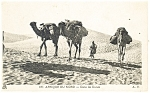 Camel Caravan in the African Desert Postcard p13222