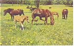 Click here to enlarge image and see more about item p13332: Herd of Horses Horse Heaven Postcard p13332