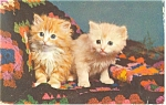 Pair of Cute Kittens-Sisters Postcard ca1980