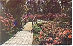 Click here to enlarge image and see more about item p13432: Azaleas  Cypress Gardens Florida  Postcard p13432 1953