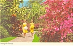 Click here to enlarge image and see more about item p13439: Sunken Gardens, St Petersburg Florida  Postcard 1966
