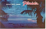 Coconut Palms in Sunset FL  Postcard p13448