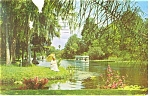 Silver Springs,FL, Glass Bottom Boats Postcard