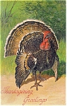 Click here to enlarge image and see more about item p13611:  Thanksgiving Greetings Postcard