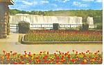 Tulip Time Niagara Falls, Canada Postcard