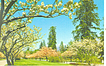 Click here to enlarge image and see more about item p13713: Vancouver,BC, Spring Blossoms Postcard