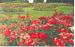 Click here to enlarge image and see more about item p13714: Vancouver BC Canada Stanley Park Flowers Postcard p13714