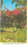 Click here to enlarge image and see more about item p13747: Sunken Gardens St Petersburg FL Postcard p13747 1965