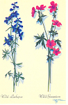 Wild Larkspur and Wild Geranium Postcard