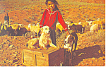Click here to enlarge image and see more about item p13885: Navajo Girl With Sheep Dogs Postcard