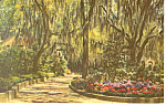 Click here to enlarge image and see more about item p13892: Hydrangeas framed with Spanish Moss  Postcard p13892