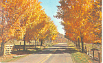 Click here to enlarge image and see more about item p13893: Autumn Foliage Postcard p13893