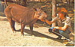 Click here to enlarge image and see more about item p13903: Tapir, Parke County, Indiana Postcard