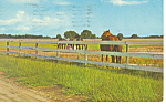 Click here to enlarge image and see more about item p13914: Ocala Horse Farm Postcard p13914