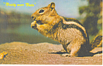 Click here to enlarge image and see more about item p13920: Nutty over Nuts Chipmunk Postcard