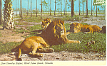 Click here to enlarge image and see more about item p13935a: Lion Country Safari, West Palm Beach, FL Postcard