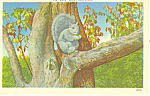 Click here to enlarge image and see more about item p13964: Nuts About This Place Squirrel Postcard