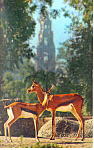 Click here to enlarge image and see more about item p13985: Thomsons Gazelle and Roosevelts Gazelle Postcard p13985