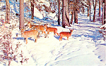 Deer in the Deep Woods Postcard 1970