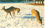Click here to enlarge image and see more about item p13997: Deer in the snow Postcard p13997