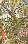 Click here to enlarge image and see more about item p1461: St Petersburg FL Gardens  Postcard