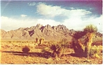 Click here to enlarge image and see more about item p14620: Beautiful Organ Mountain, New Mexico Postcard 1963