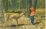 Click here to enlarge image and see more about item p14637: Deer in the Springtime Postcard
