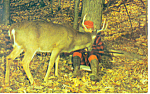 Click here to enlarge image and see more about item p14641: Sweet Dreams Dozing Deer Hunter Postcard 1986