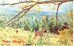 Click here to enlarge image and see more about item p14643: Perfect Chance! Deer Hunter Postcard