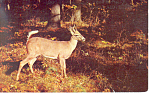 Click here to enlarge image and see more about item p14646: A Little Deer Postcard