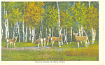 Deer in Kaibab National Forest Postcard